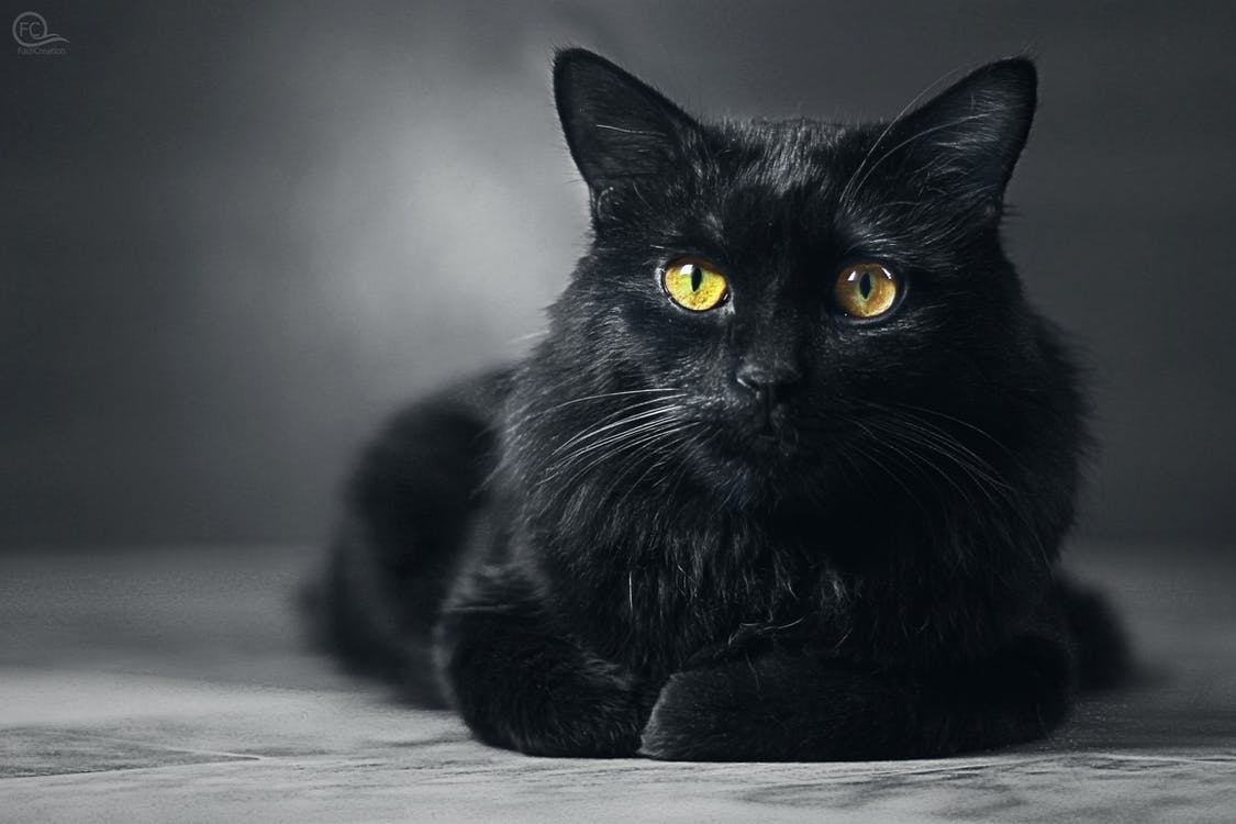Free Stock Photo Of Black Cat Black Cat Wallpaper Cat
