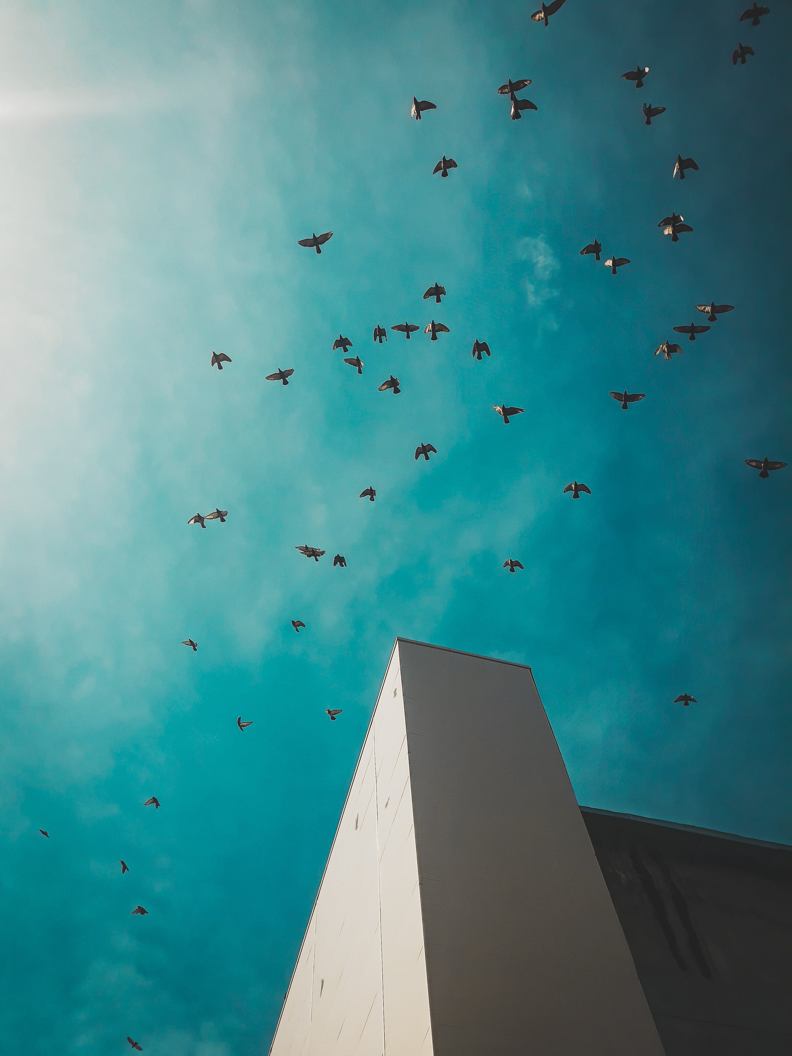 Worm's-eye View Photography of Flying Birds