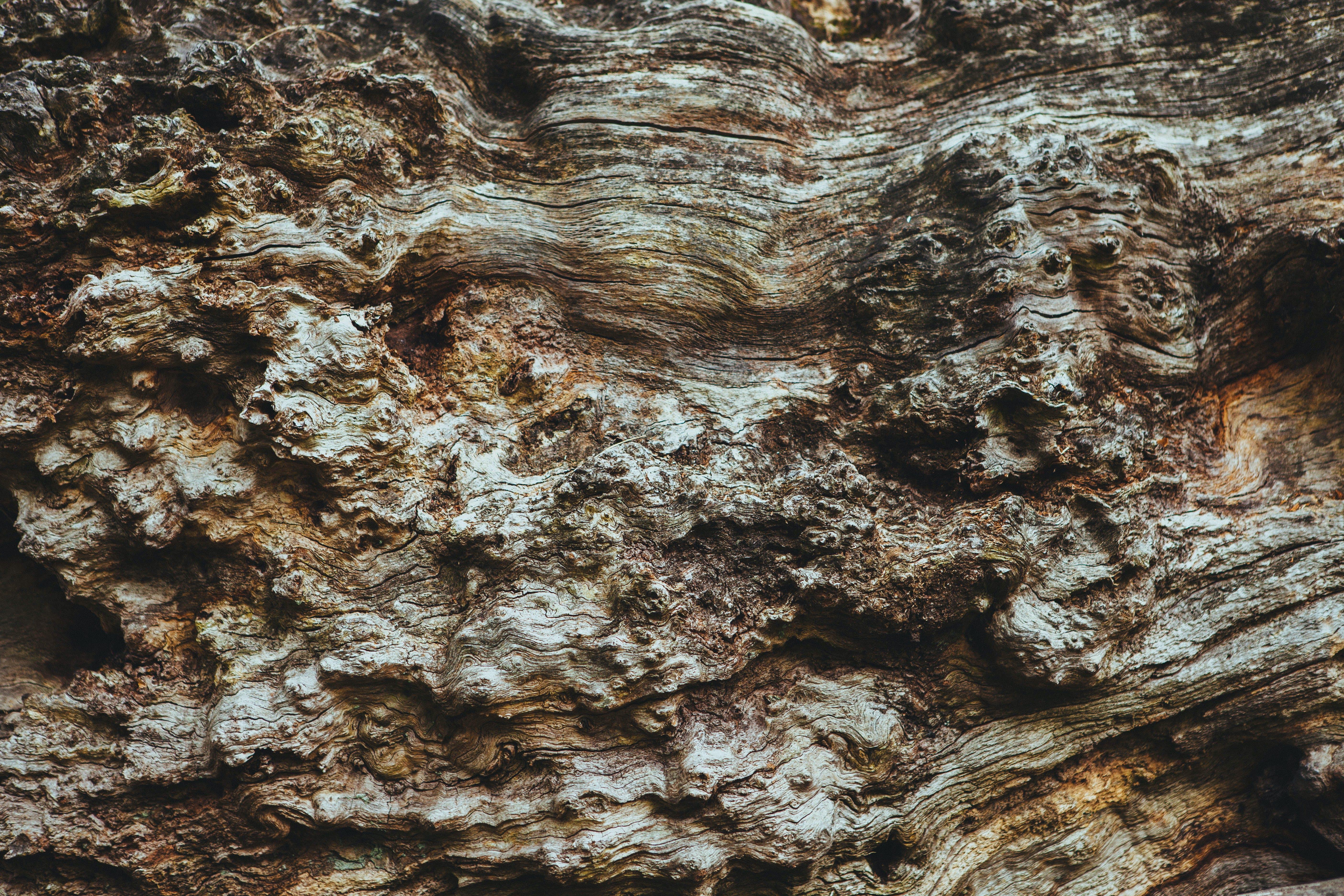 ağaç, ağaç kabuğu, ahşap, kahverengi içeren Ücretsiz stok fotoğraf