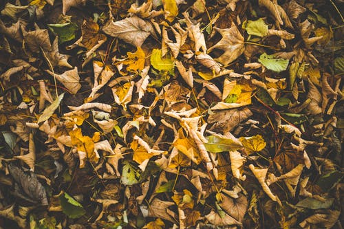 Бесплатное стоковое фото с сухие листья