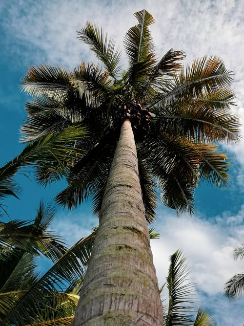 Palm Tree during Day