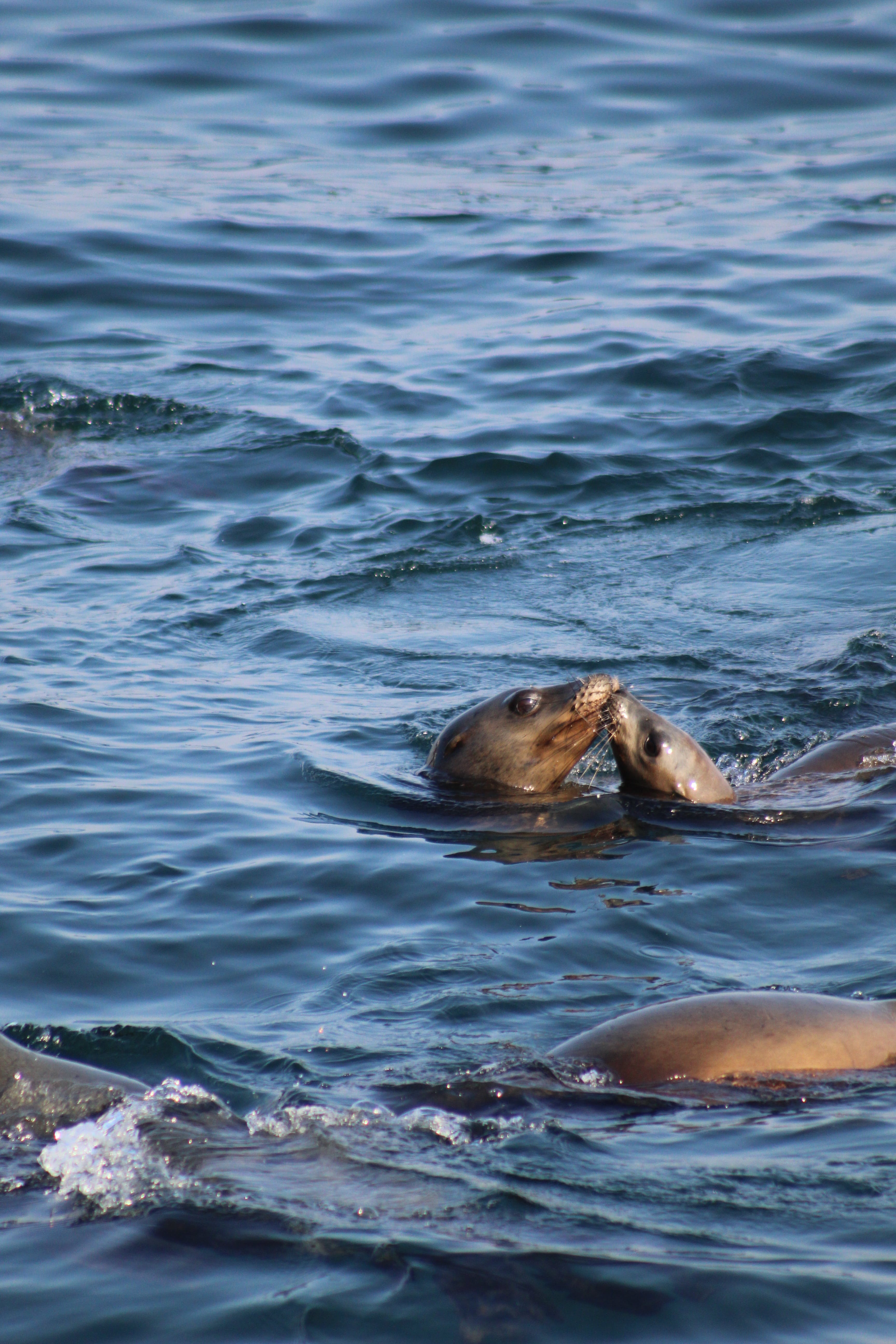 Sea Lion In Body Of Water