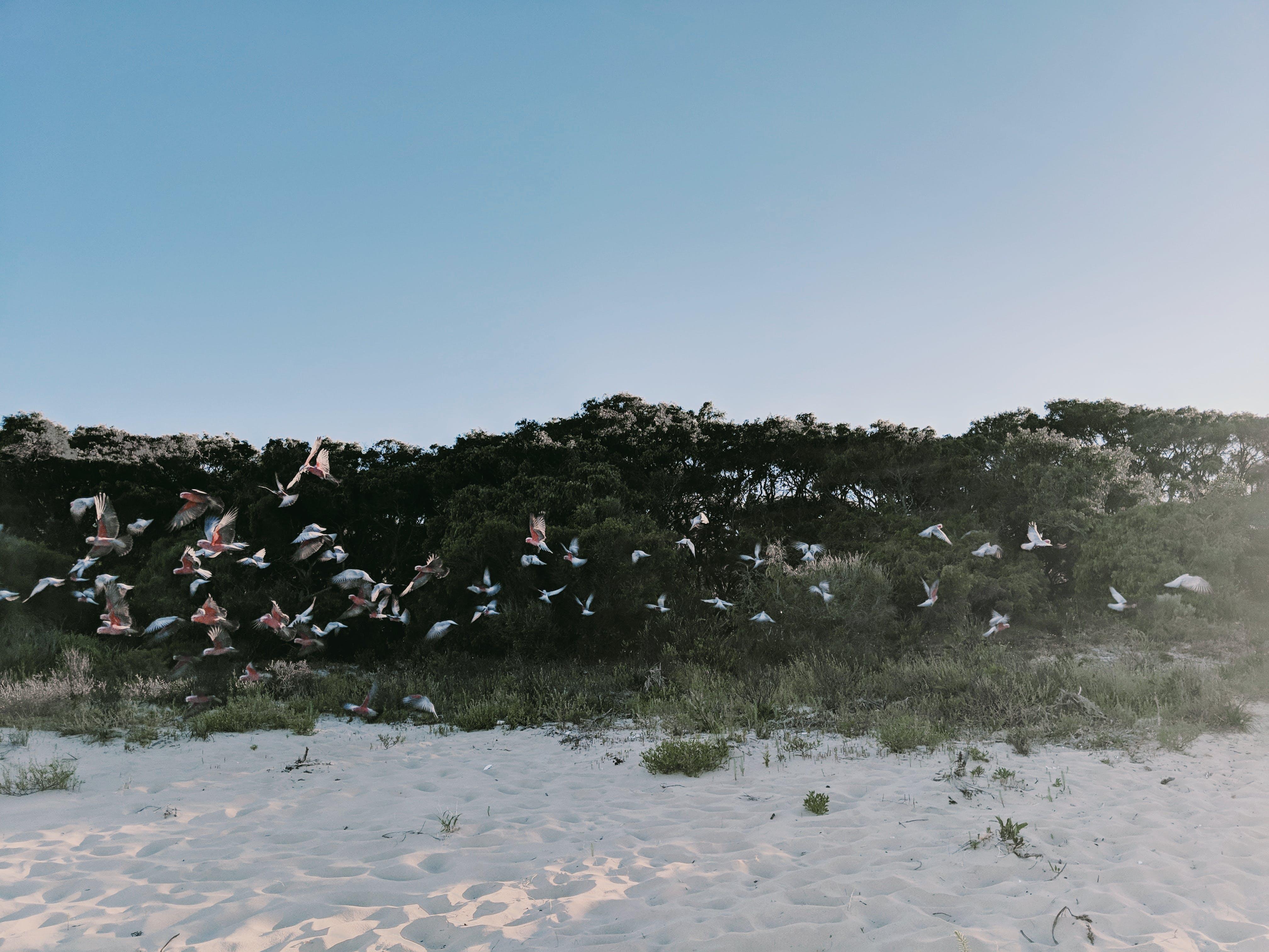 Ilmainen kuvapankkikuva tunnisteilla eläimet, hiekka, hiekkaranta, merenranta