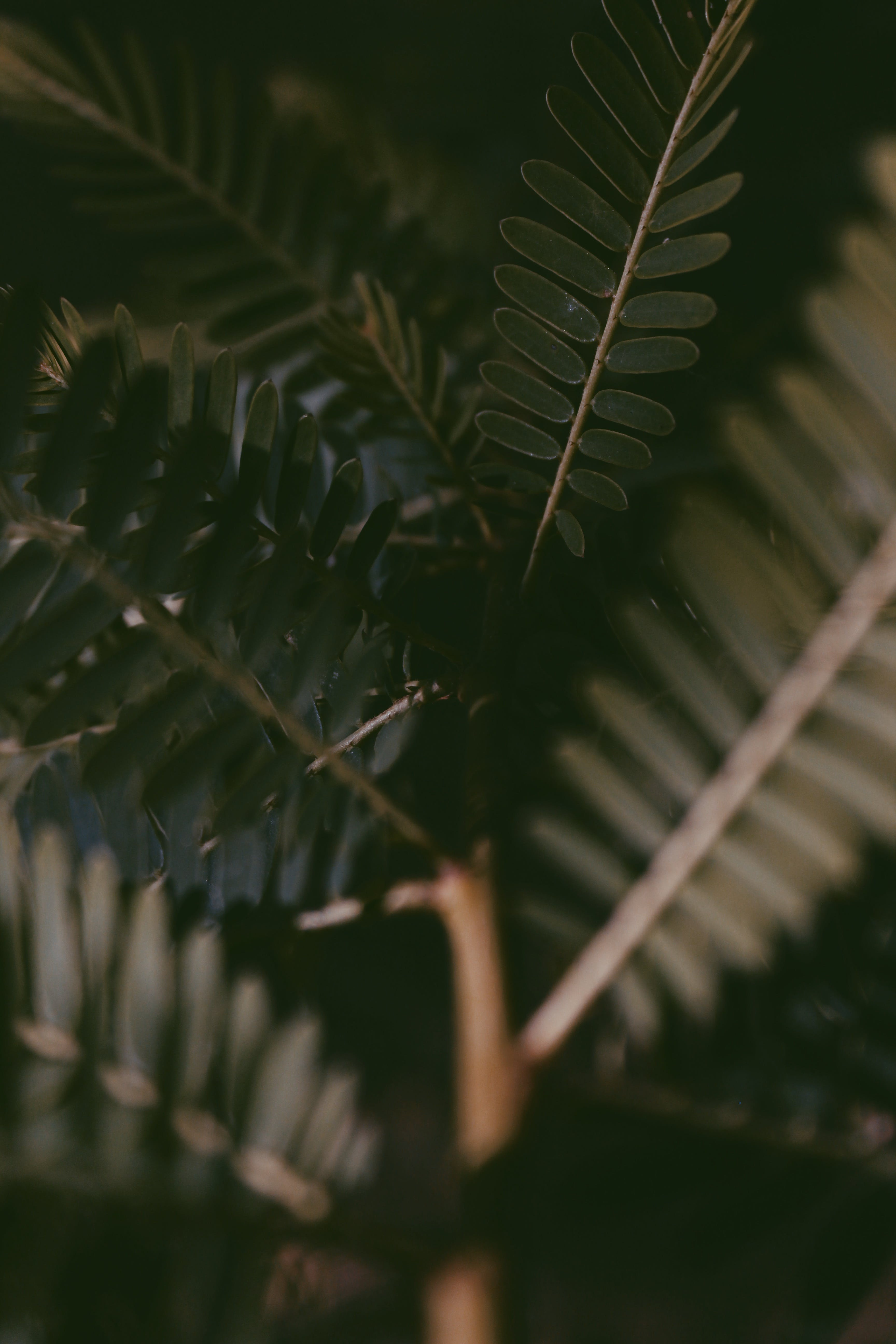 Foto profissional grátis de folhas verdes, planta