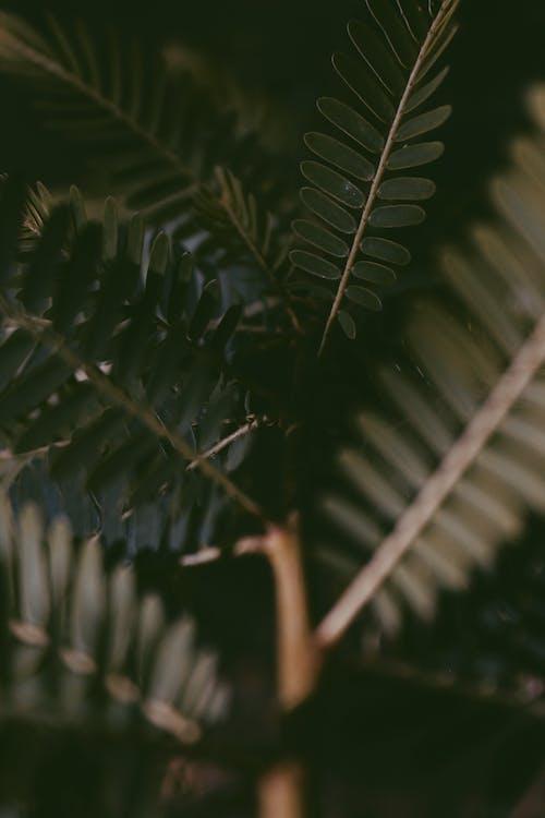 Immagine gratuita di foglie verdi, impianto