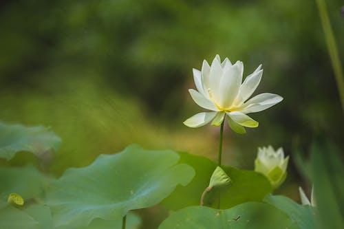 Darmowe zdjęcie z galerii z biały, kwiat, natura, zielony