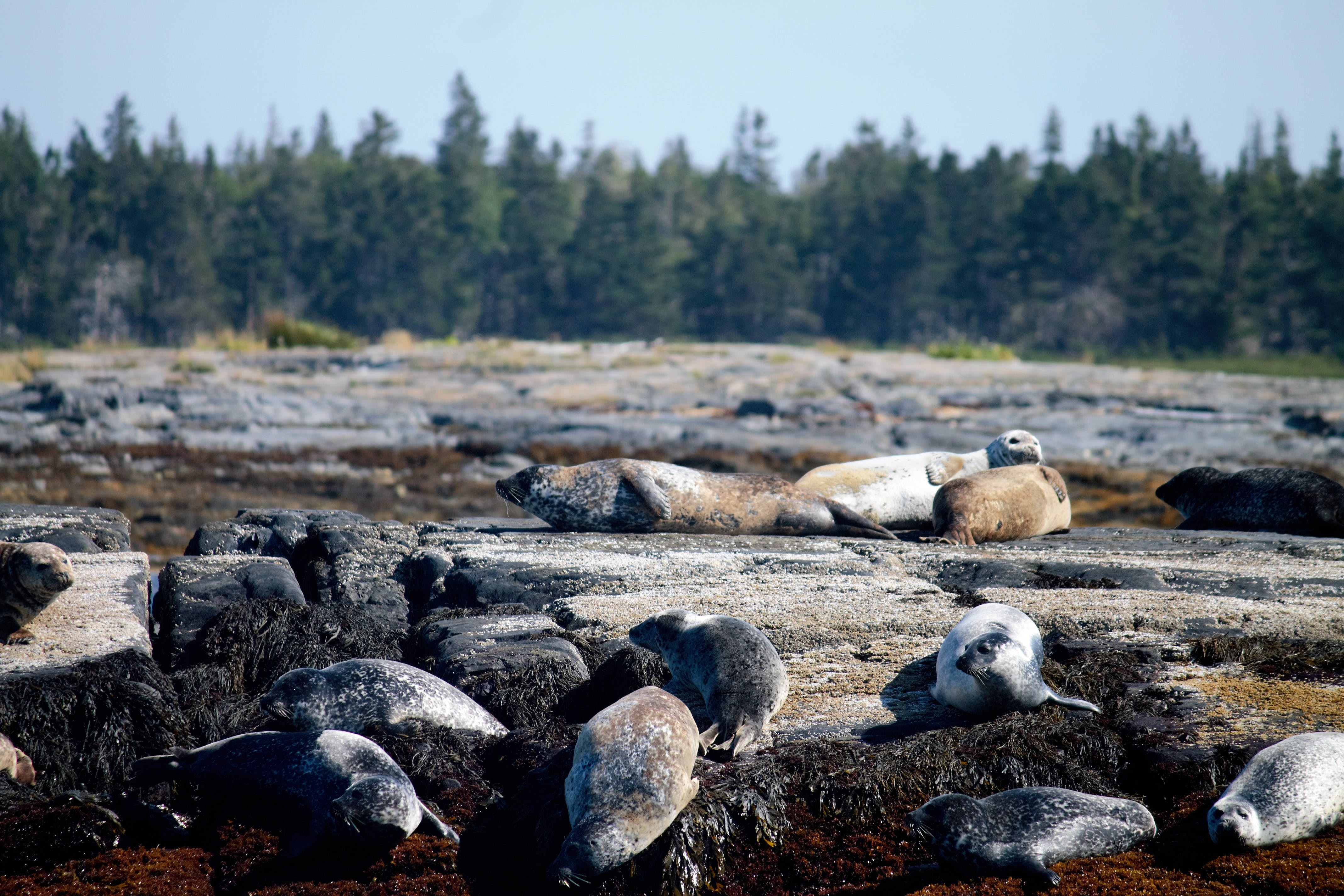 Free stock photo of halifax, novascotia, seals