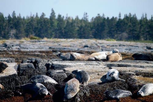 Free stock photo of halifax, novascotia, seals