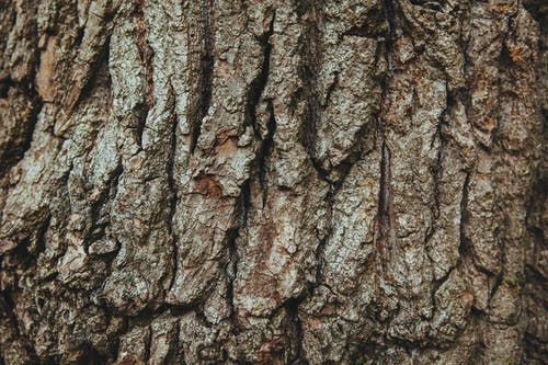 Fotos de stock gratuitas de árbol, cáscara, corteza, ladrar