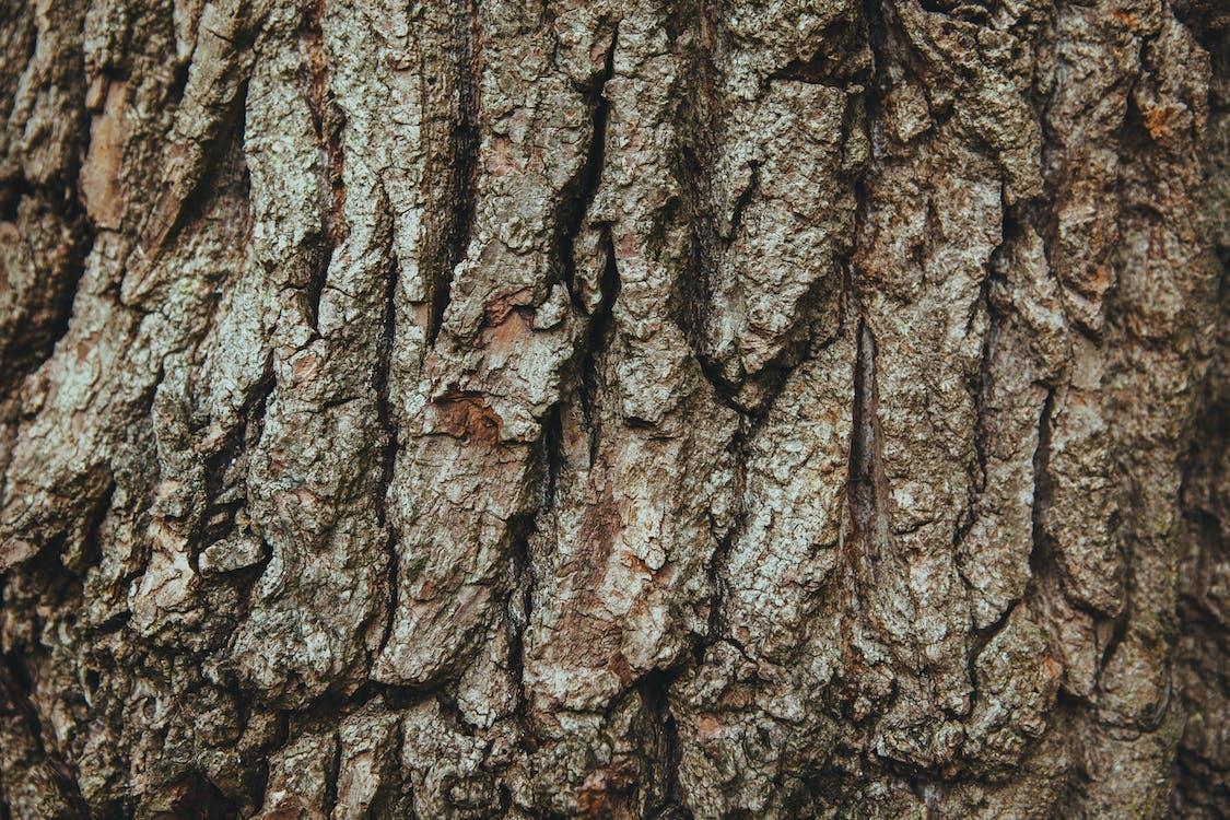 aboiement, arbre, bois
