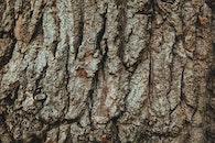 wood, tree, bark