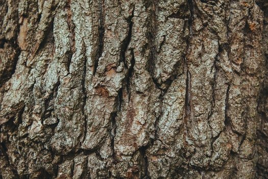 Free stock photo of wood, tree, bark, english oak