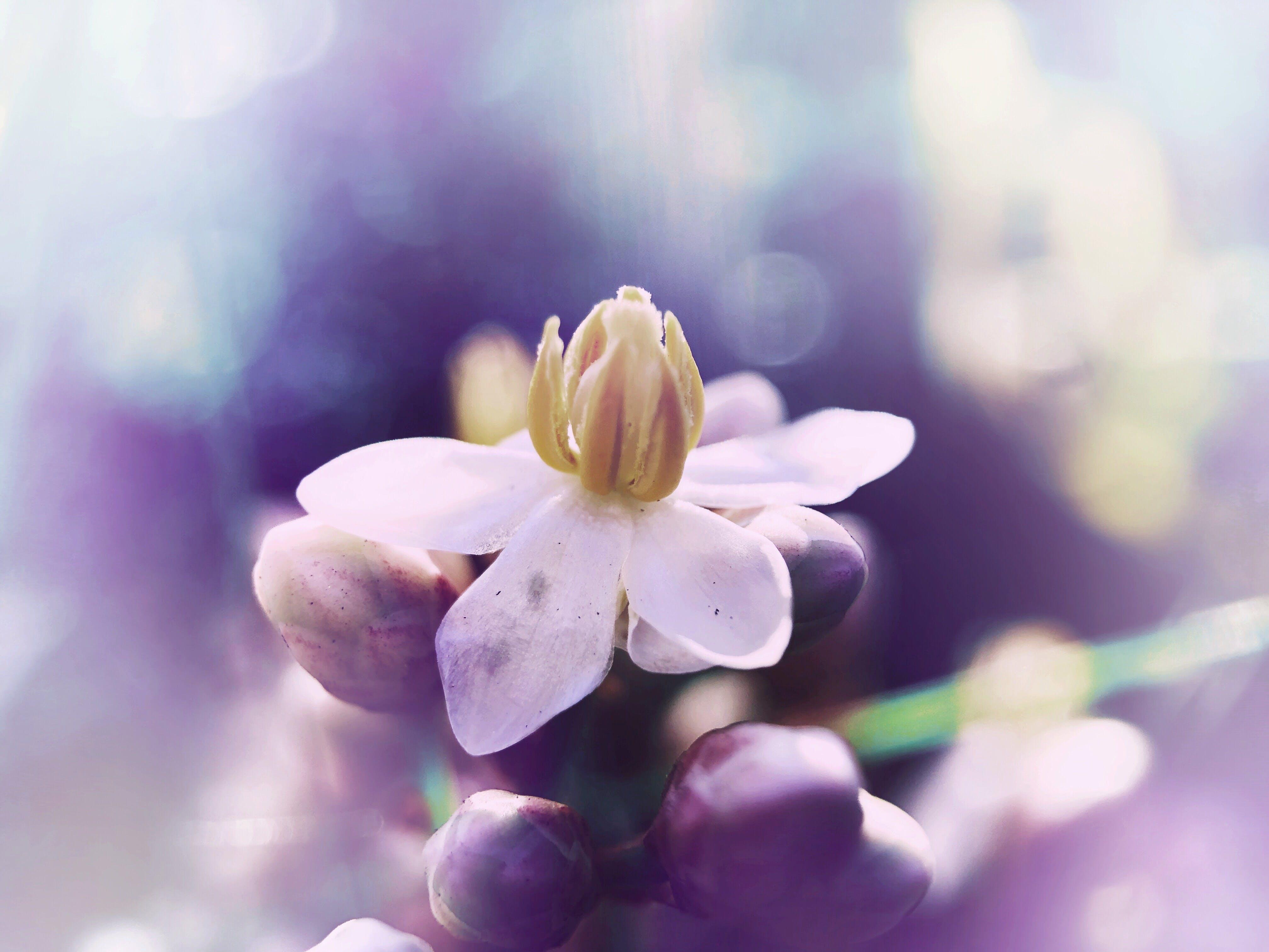 Kostenloses Stock Foto zu #blume #natur #garten # knöpfe #dreamy #pastel