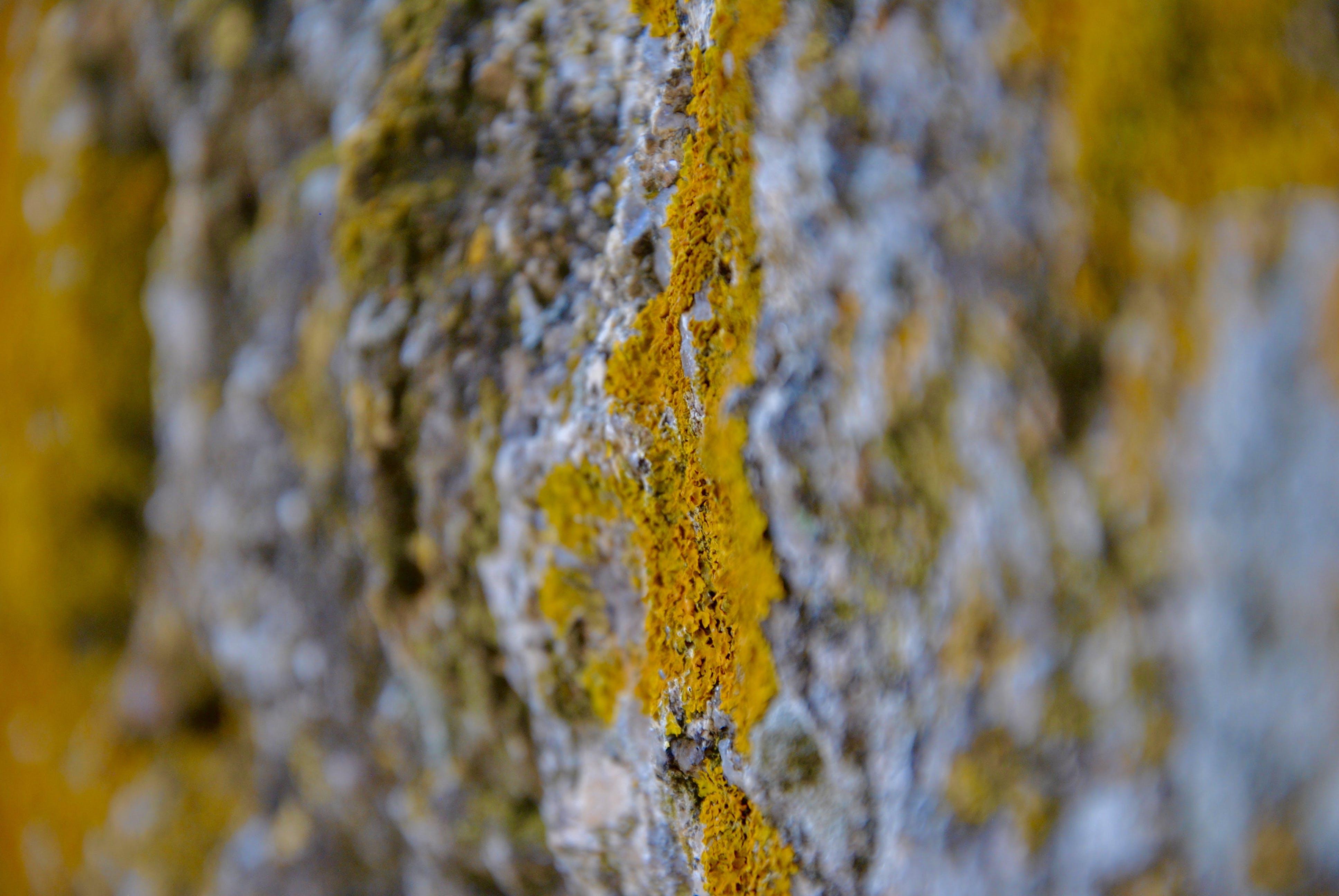 Free stock photo of micro, moss, Mossy rocks, rock