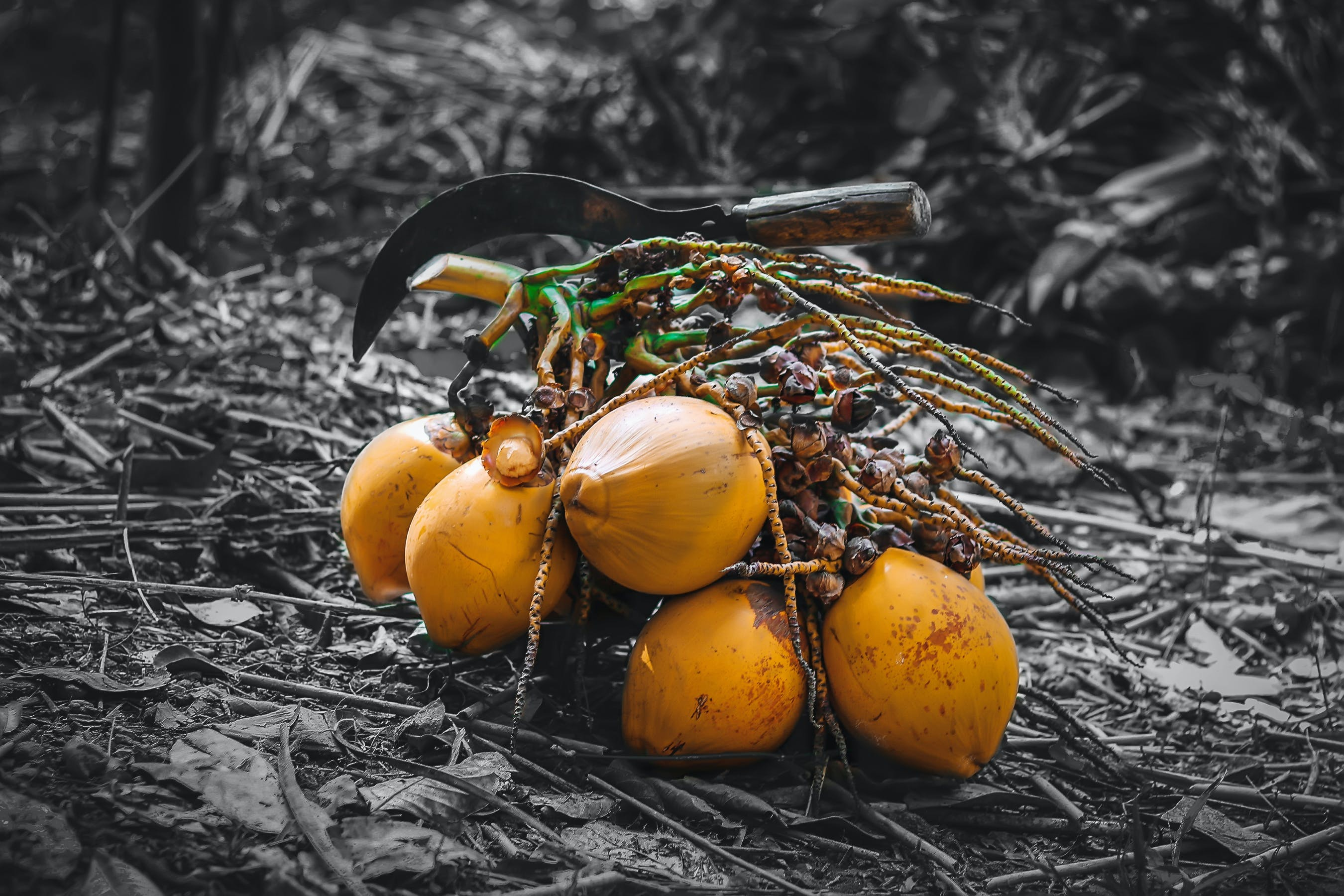 Free stock photo of coconut, colour, dark, fruits