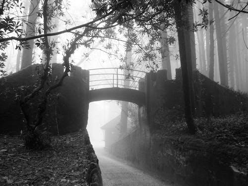 Безкоштовне стокове фото на тему «ліс, міст, туман, туманний»