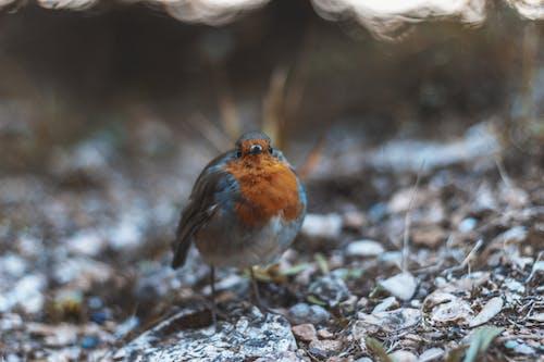 Fotobanka sbezplatnými fotkami na tému makro, malý, perie, zviera