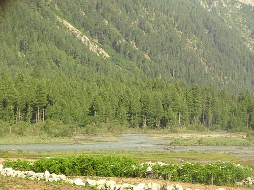 Fotos de stock gratuitas de arboles, árboles davdar, davdar, kumrat