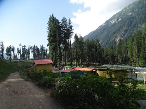 Fotos de stock gratuitas de bosque, kumrat, Pakistán, tourisam