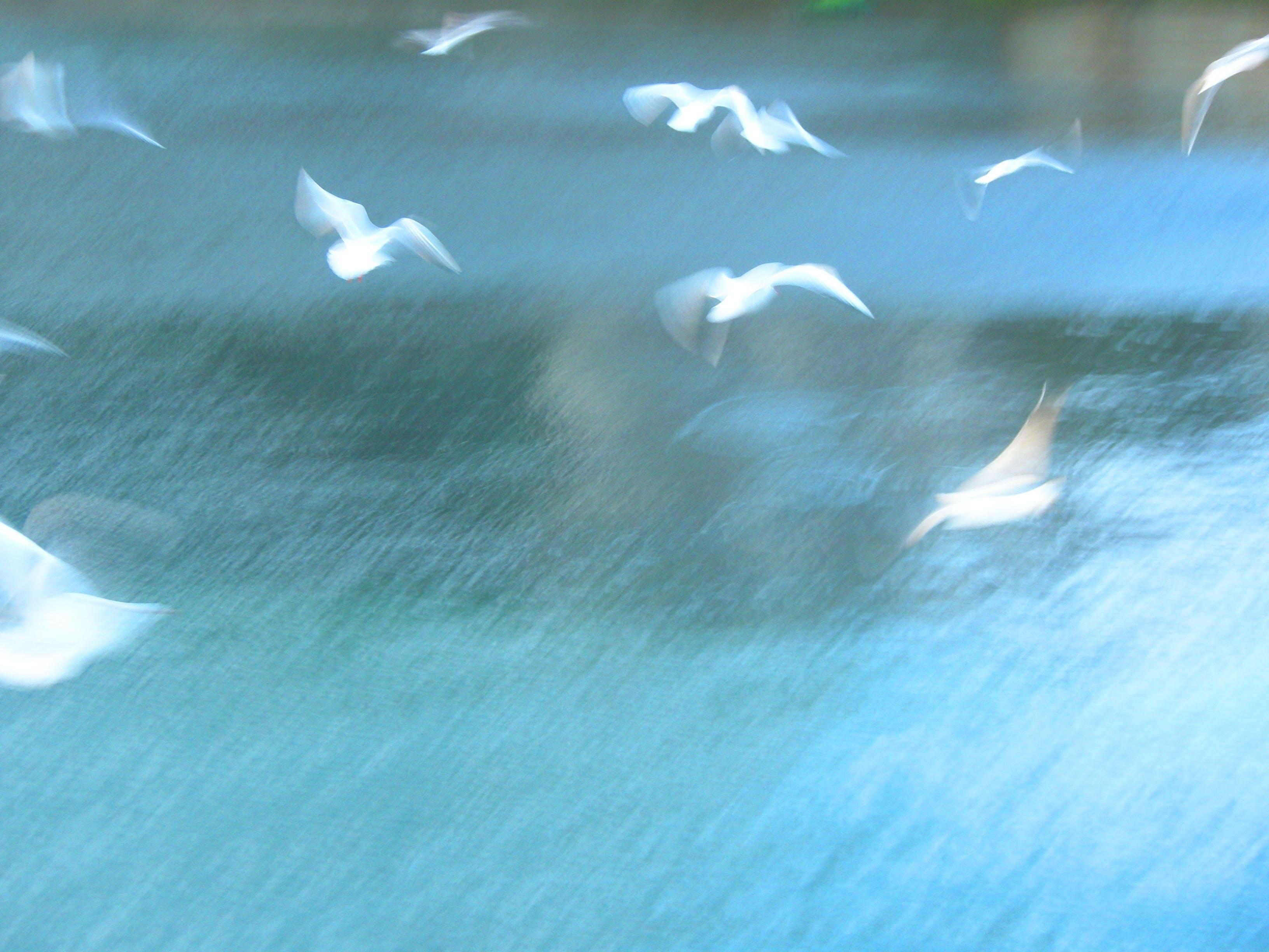 Free stock photo of sea, seagull, seagulls, seaside