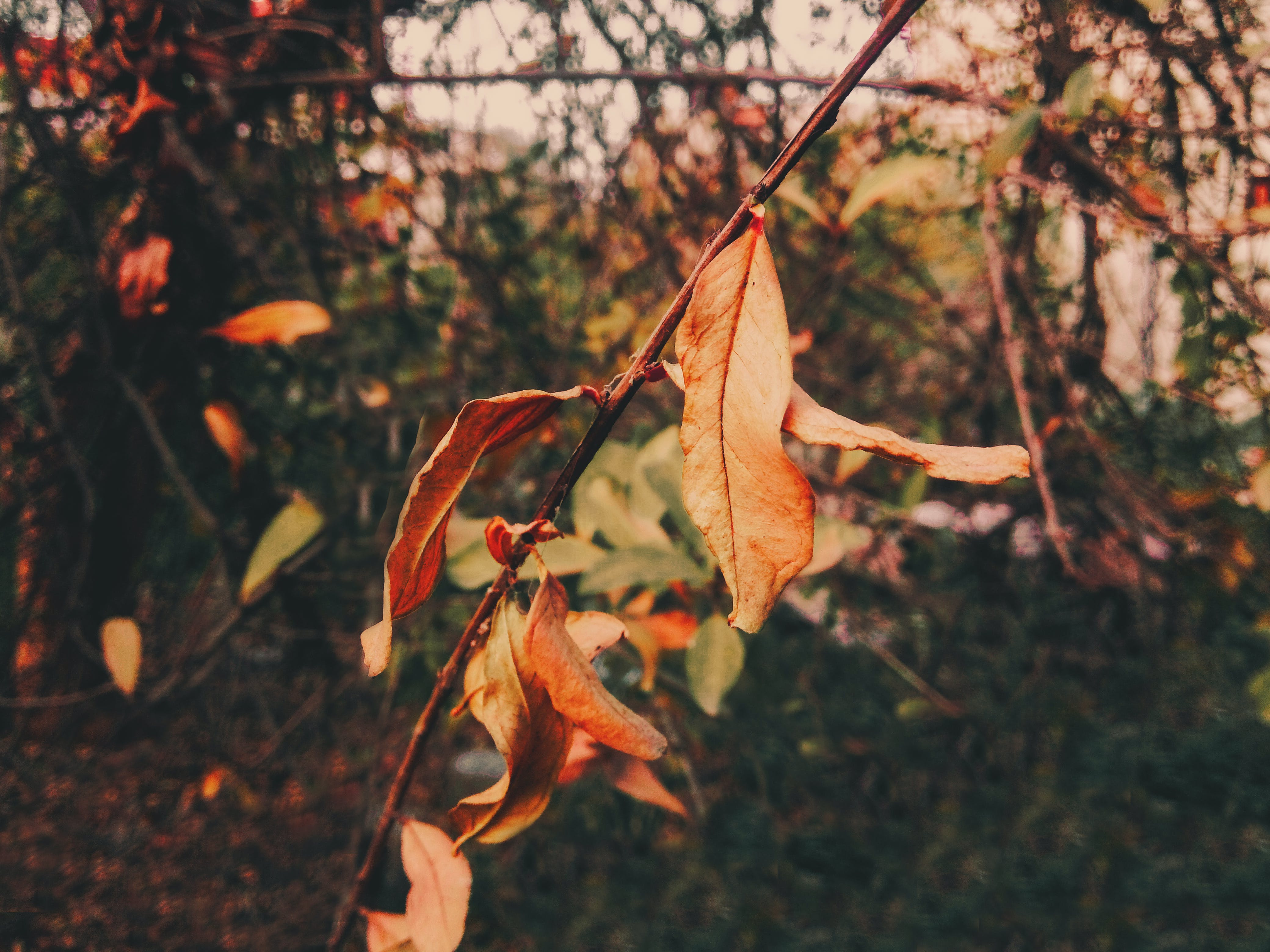 Free stock photo of autumn, autumn colors, branch, flower
