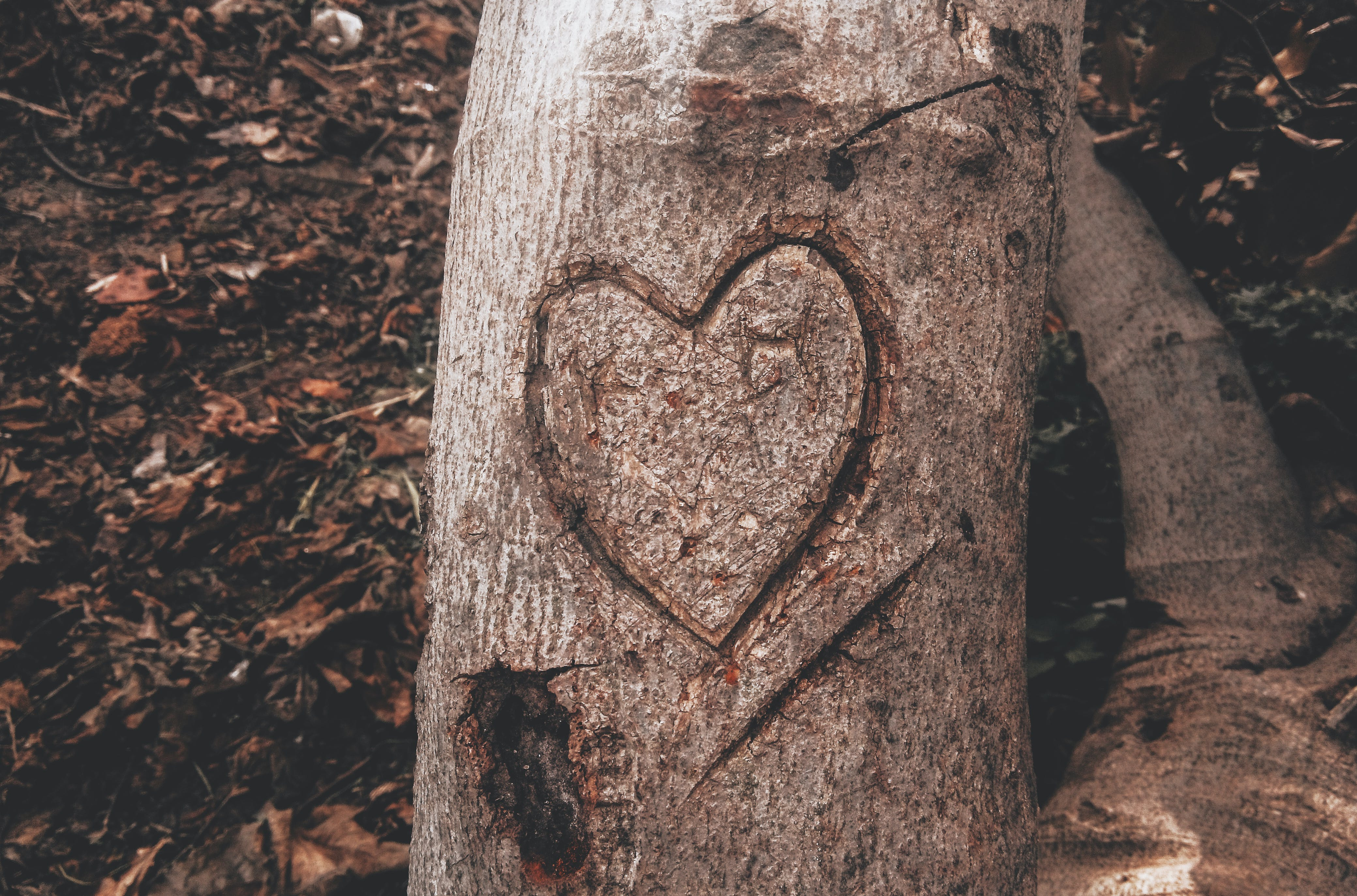 Free stock photo of forest, grass, ground, heart