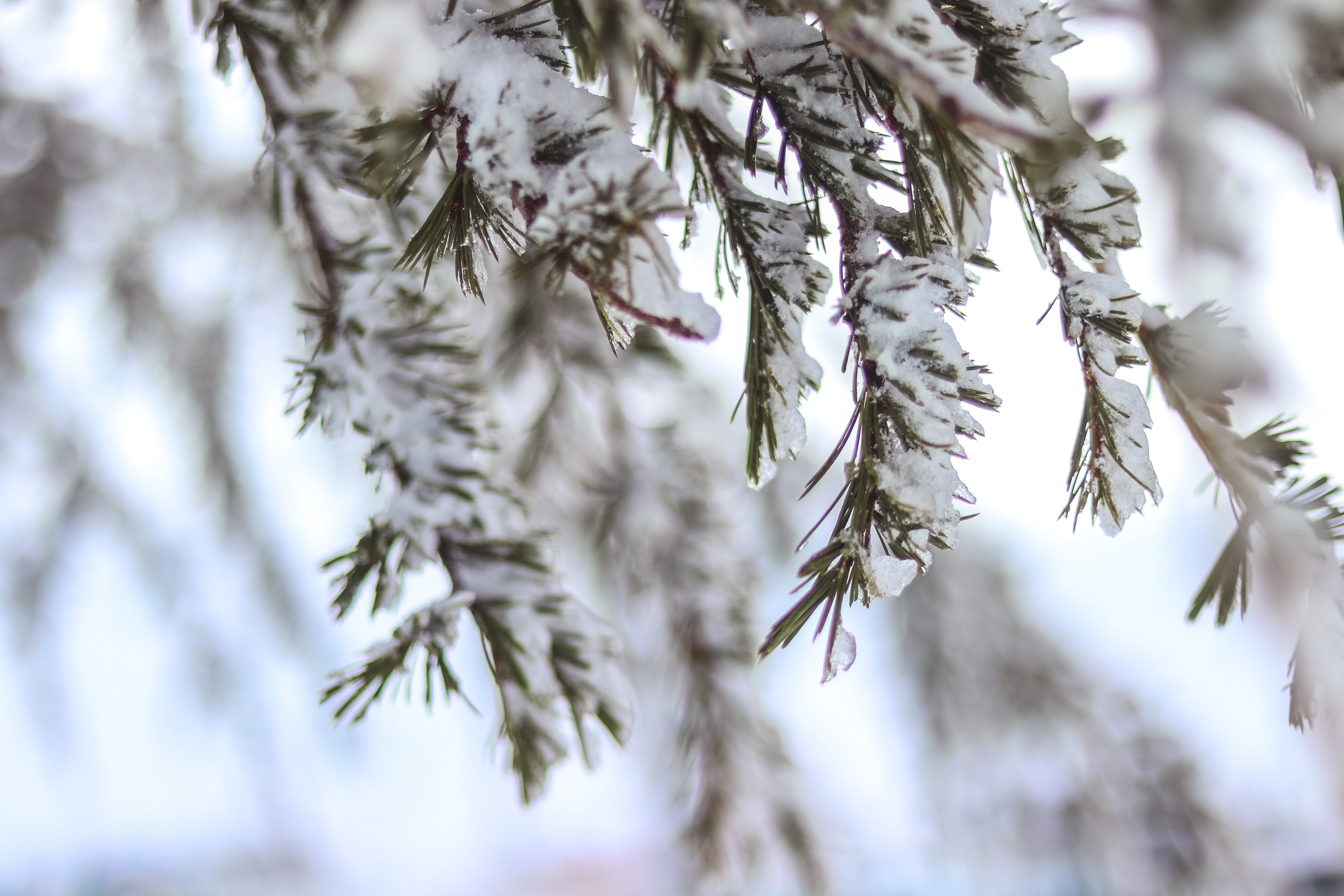 Selective Focus Photography of Snow-covered Tree Branch
