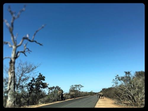克鲁格国家公园, 南非, 大象, 藍色 的 免费素材照片