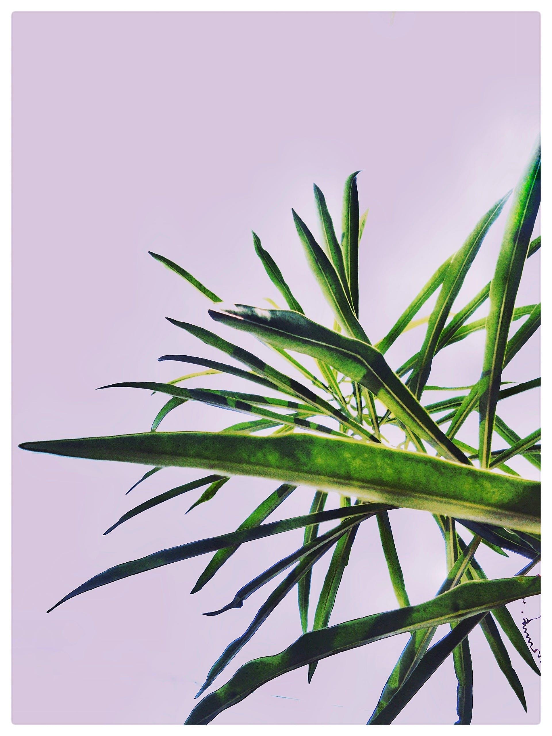 Linear Green-leafed Plants Near Wall