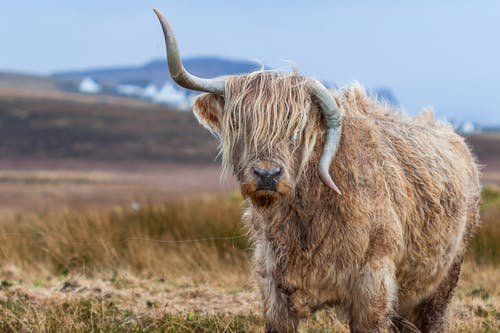 Tilt Shift Photography of Brown With Horns 4 Legged Animal at Daytime
