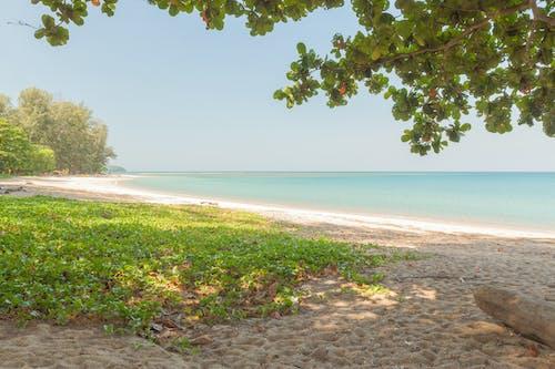 คลังภาพถ่ายฟรี ของ ชายหาด, ซูรินาเม, ประเทศไทย