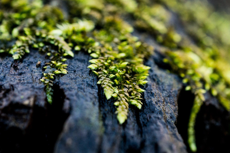 Free stock photo of green, log, macro, macro photo