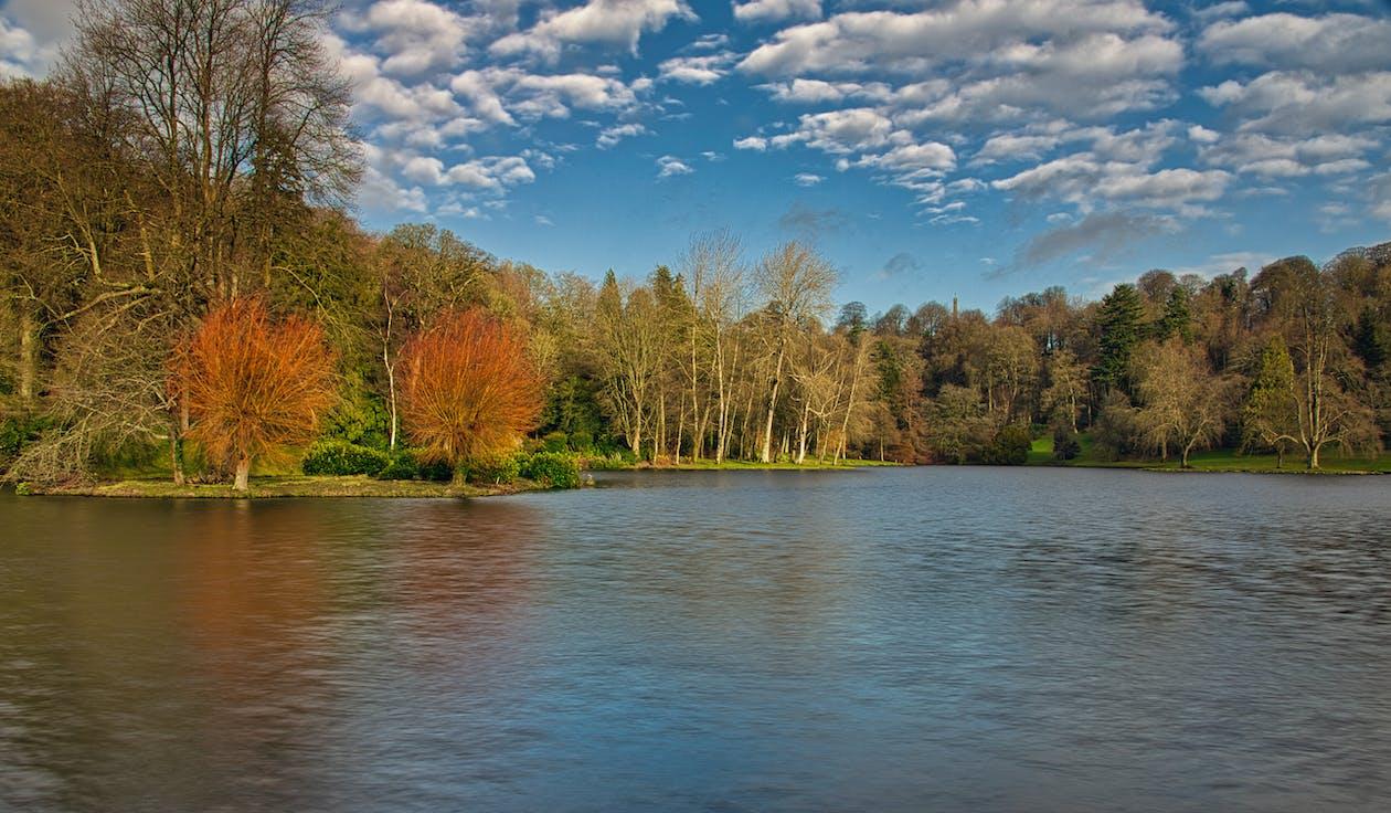 arbres, cel blau, cos d'aigua