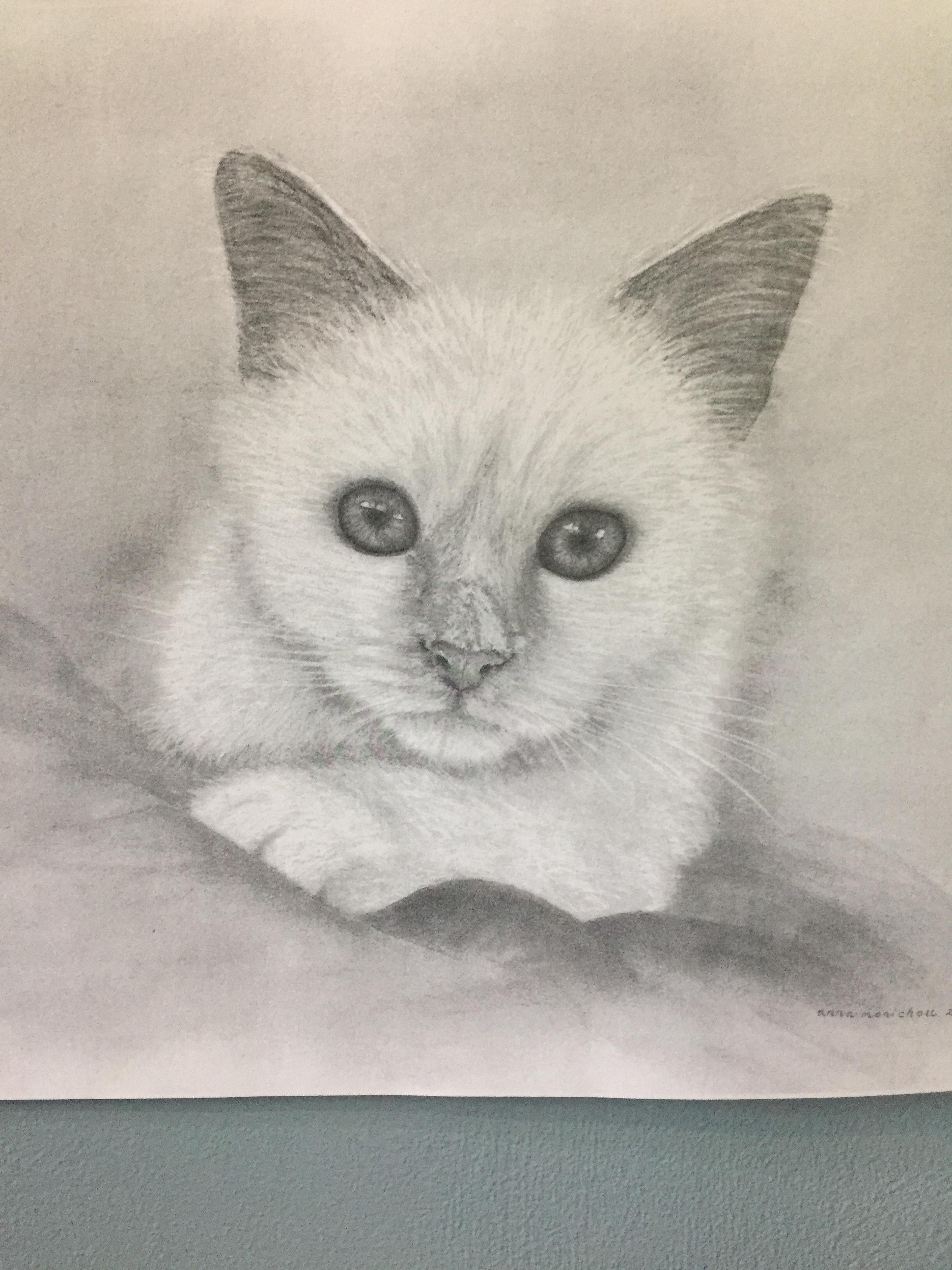 Unduh 63+  Gambar Kucing Dengan Pensil Paling Lucu HD