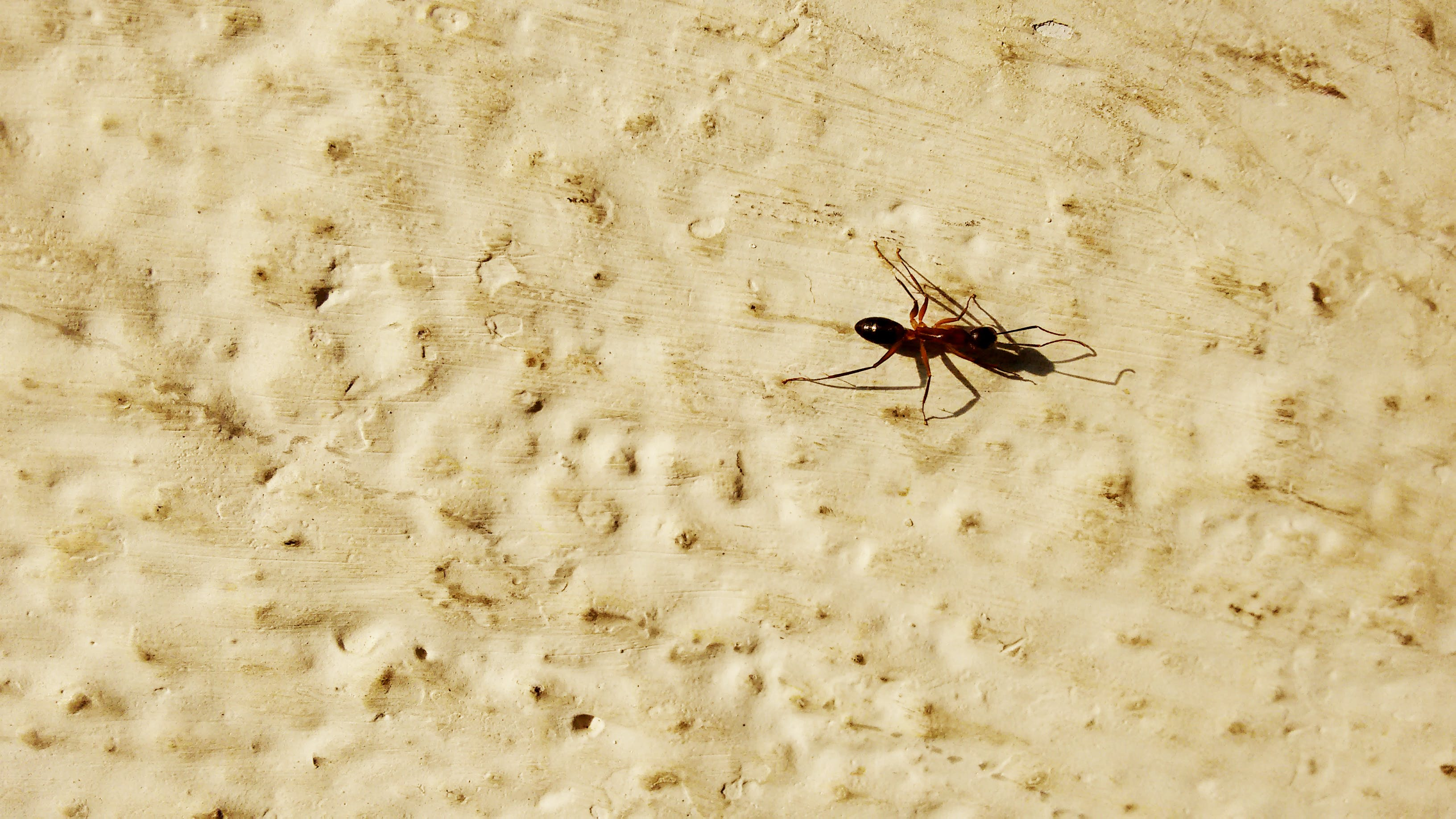 Free stock photo of ant, hd background, sun, wallpaper