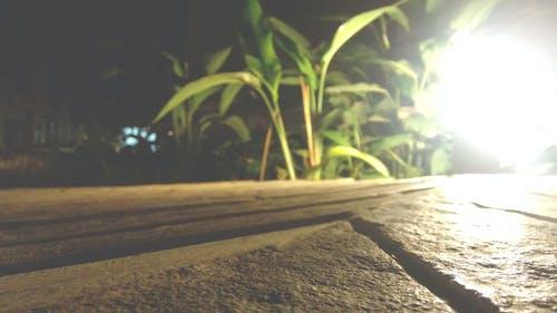 açık, arka fon, bitkiler, çim içeren Ücretsiz stok fotoğraf