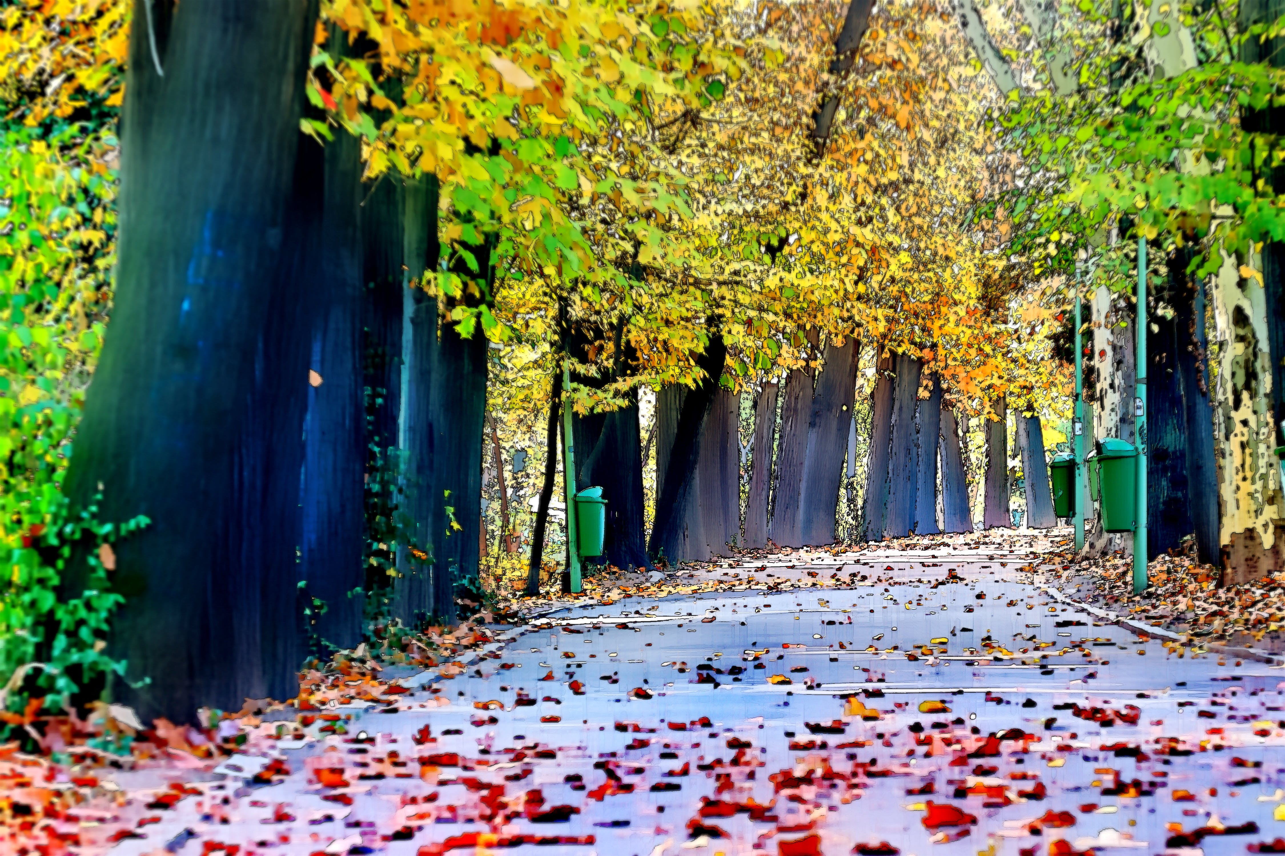 Free stock photo of edited, fallen leaves, nature, park