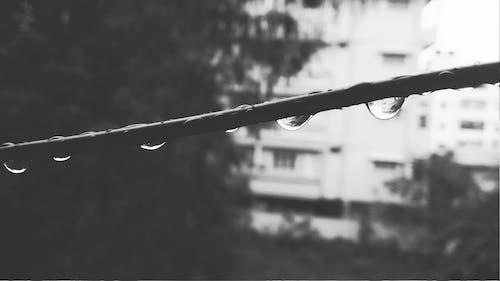 คลังภาพถ่ายฟรี ของ bengalore, saurav, น้ำ, ฝน