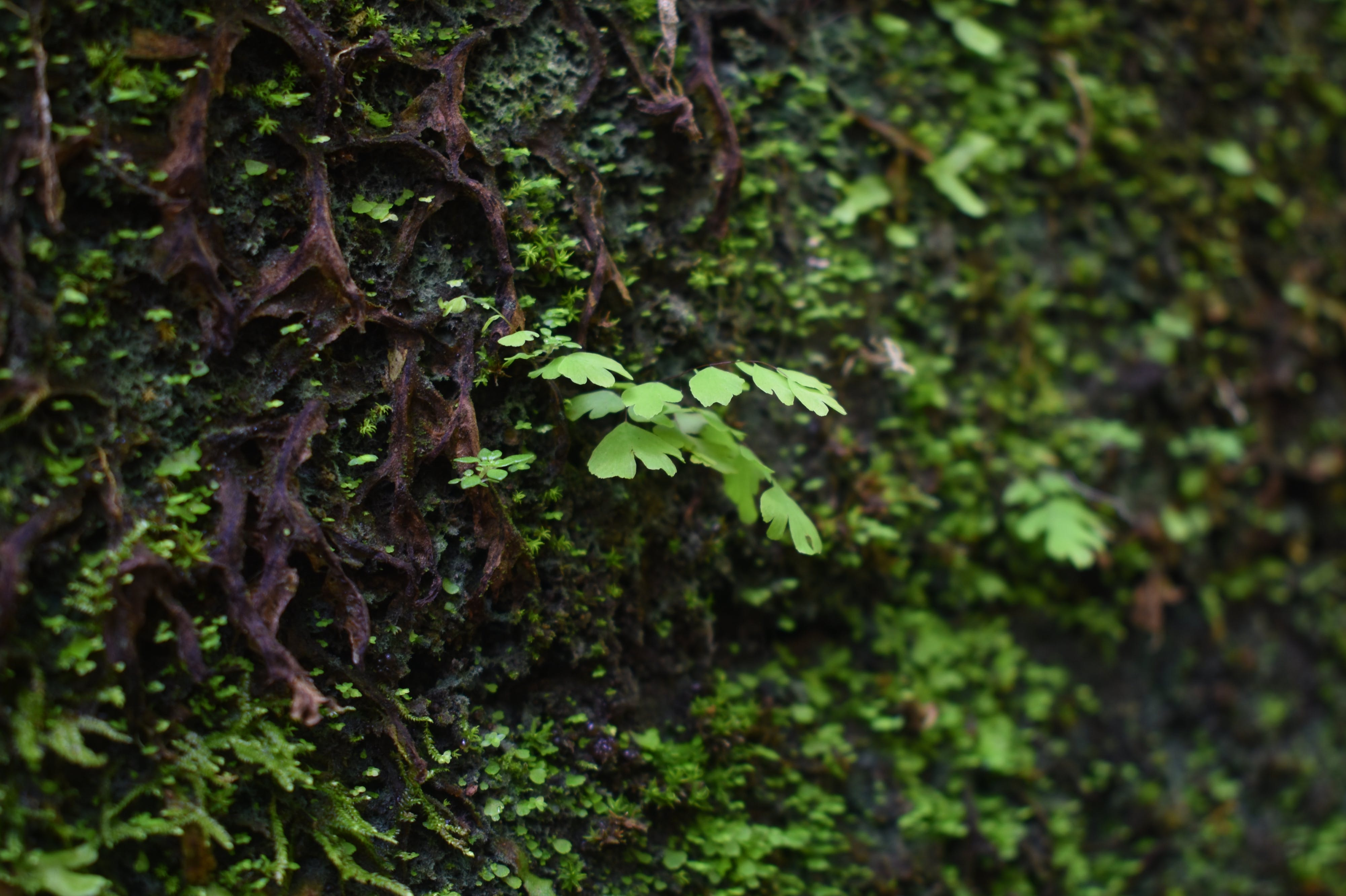 Free stock photo of green, moist, nature, texture