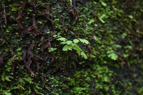 Ilmainen kuvapankkikuva tunnisteilla kostea, luonto, tekstuuri, vihreä