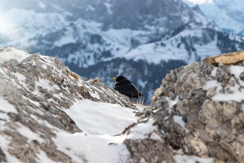 Focus Photography of Black Bird Near Mountain Cliff