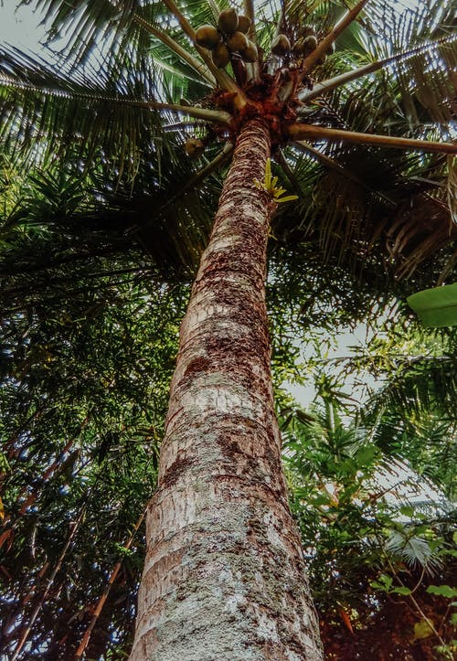 Photos gratuites de arbre, cocotier, contre-plongée, espace extérieur