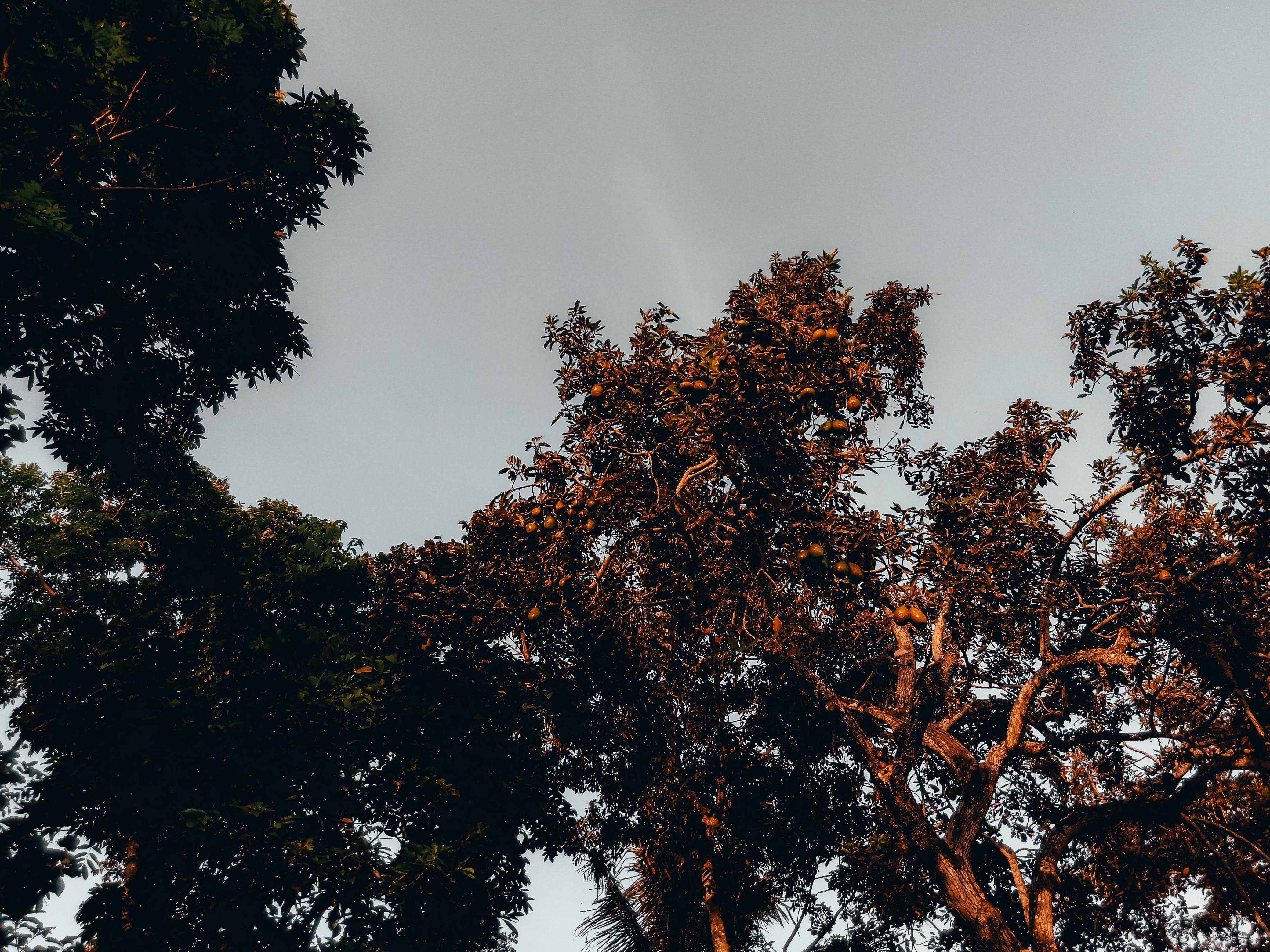 경치가 좋은, 과일, 과일 나무, 나무의 무료 스톡 사진