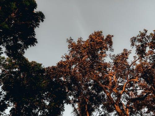 低角度拍攝, 增長, 天空, 果樹 的 免费素材照片