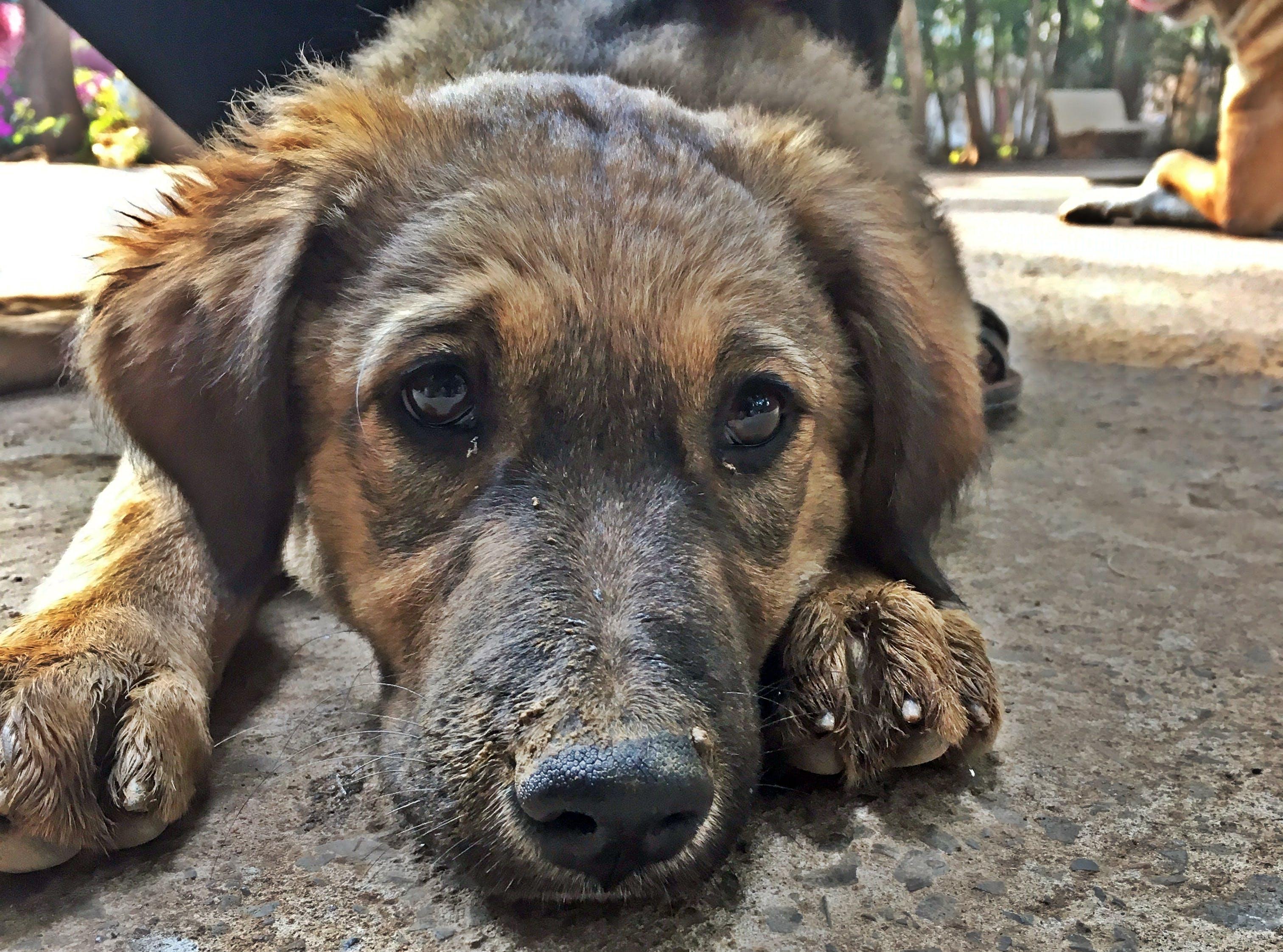 Free stock photo of animal lover, baby dog, dog, dog lover