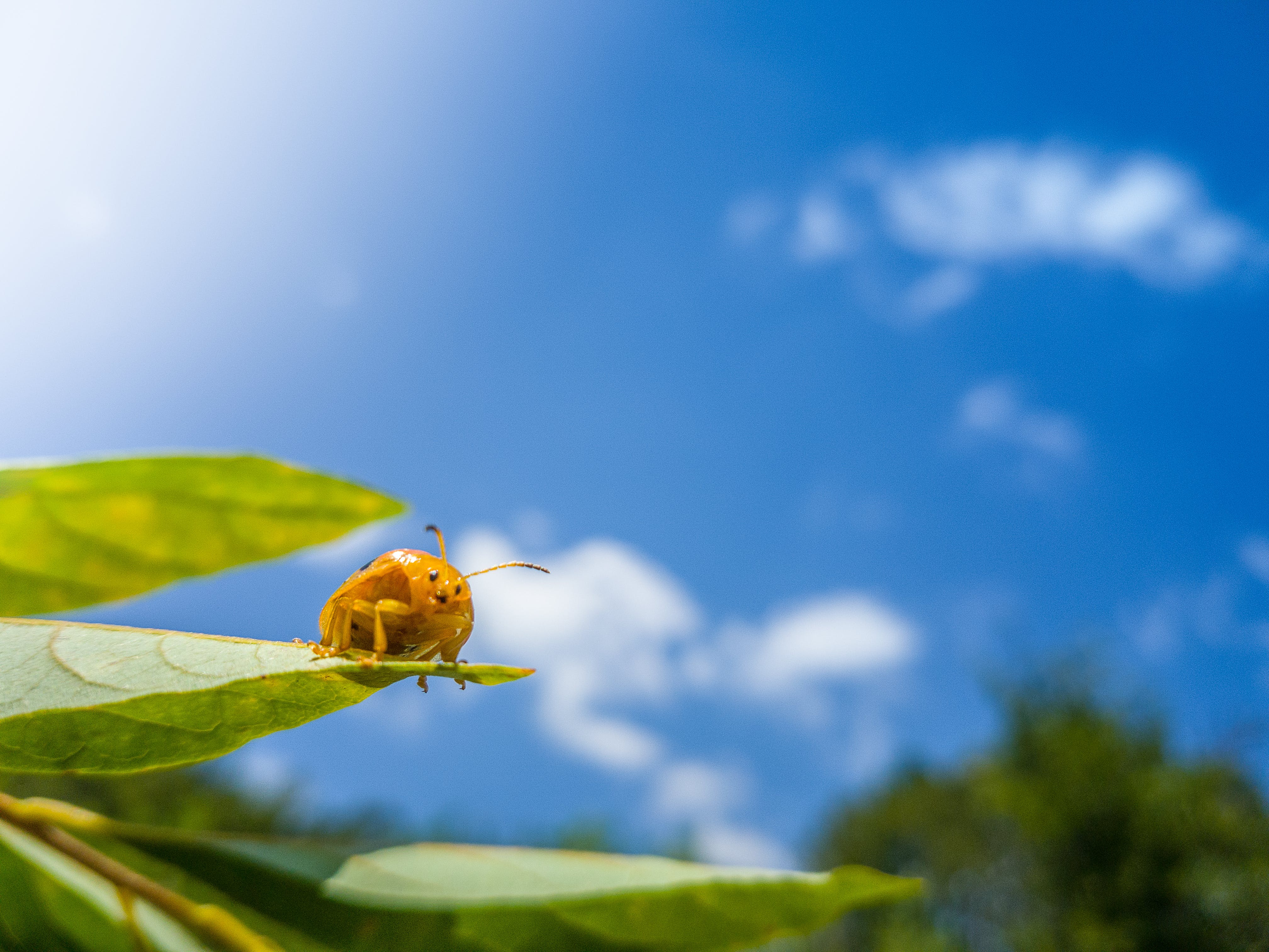 Free stock photo of arbor, blue sky, leaf