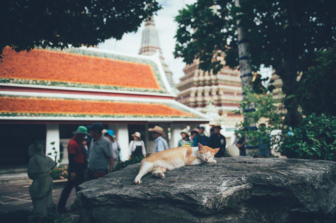Cat Lying Down on Rock