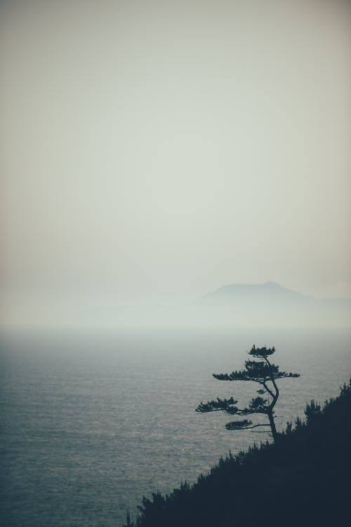 Free stock photo of the cliff, The Pine, the sea