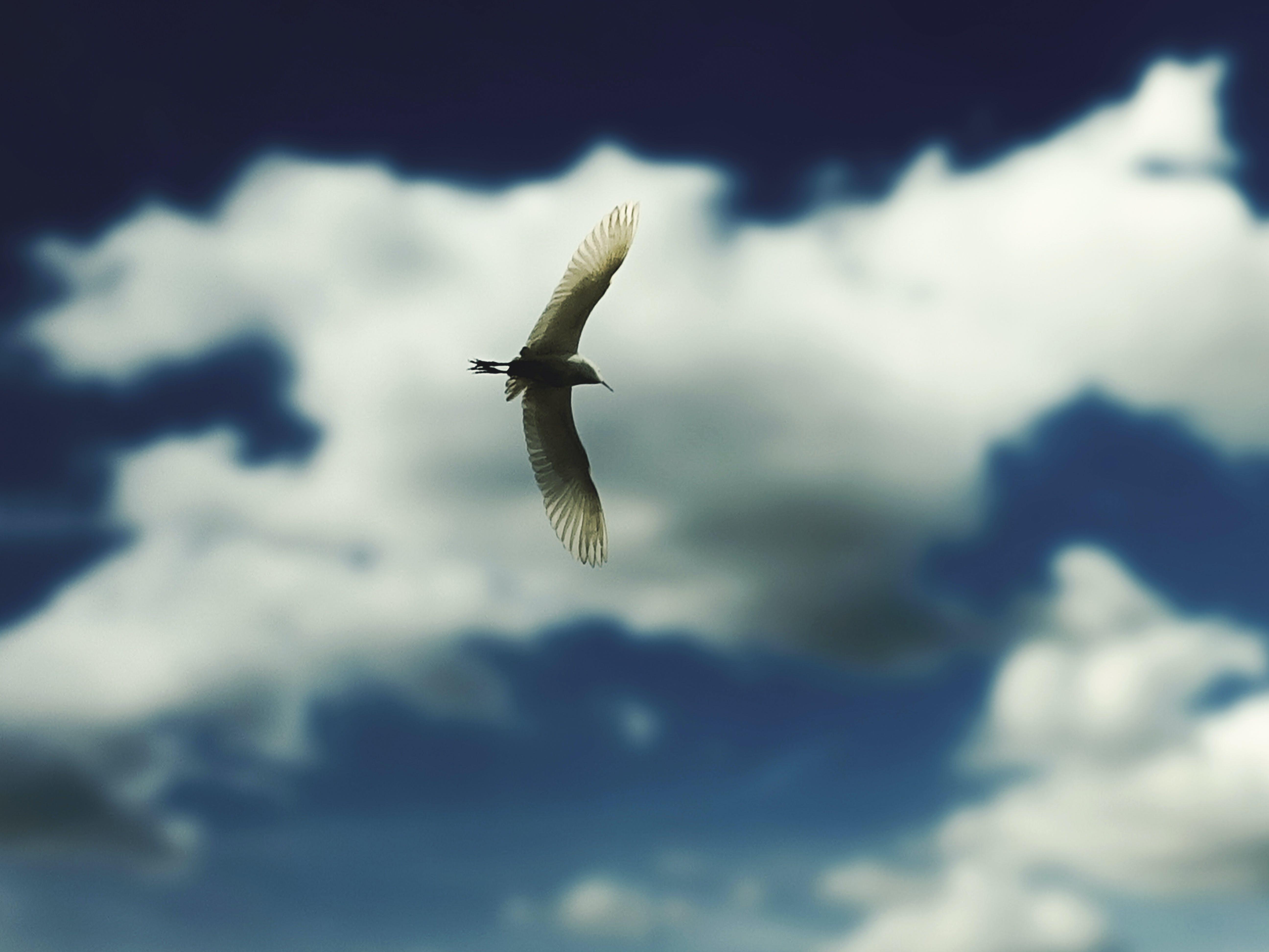 Free stock photo of animal, bird, bird photography, birdpicture
