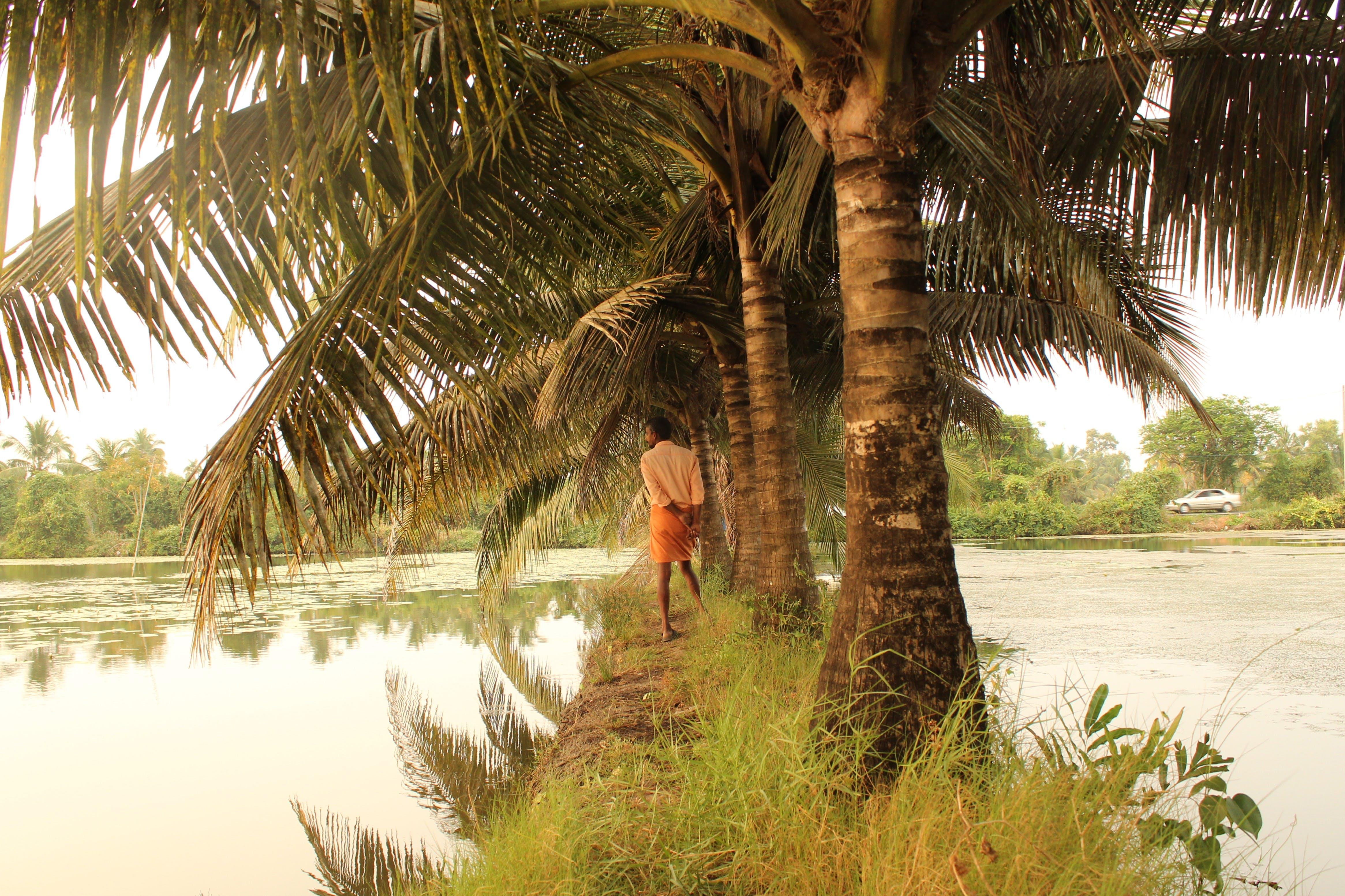 Základová fotografie zdarma na téma cestovatelé, krása v přírodě, odraz jezera, palma